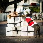 Sissy-Boy Kerstmarkt